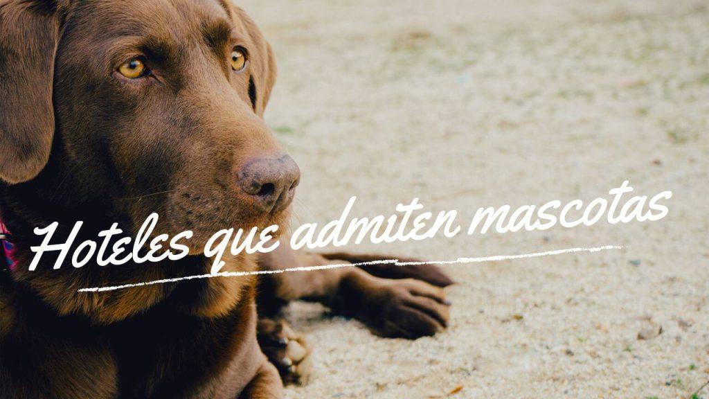 Hoteles que admiten mascotas perros