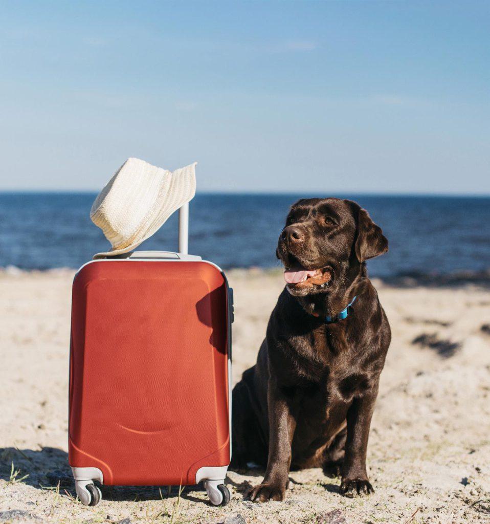 img11 hoteles que admiten mascotas