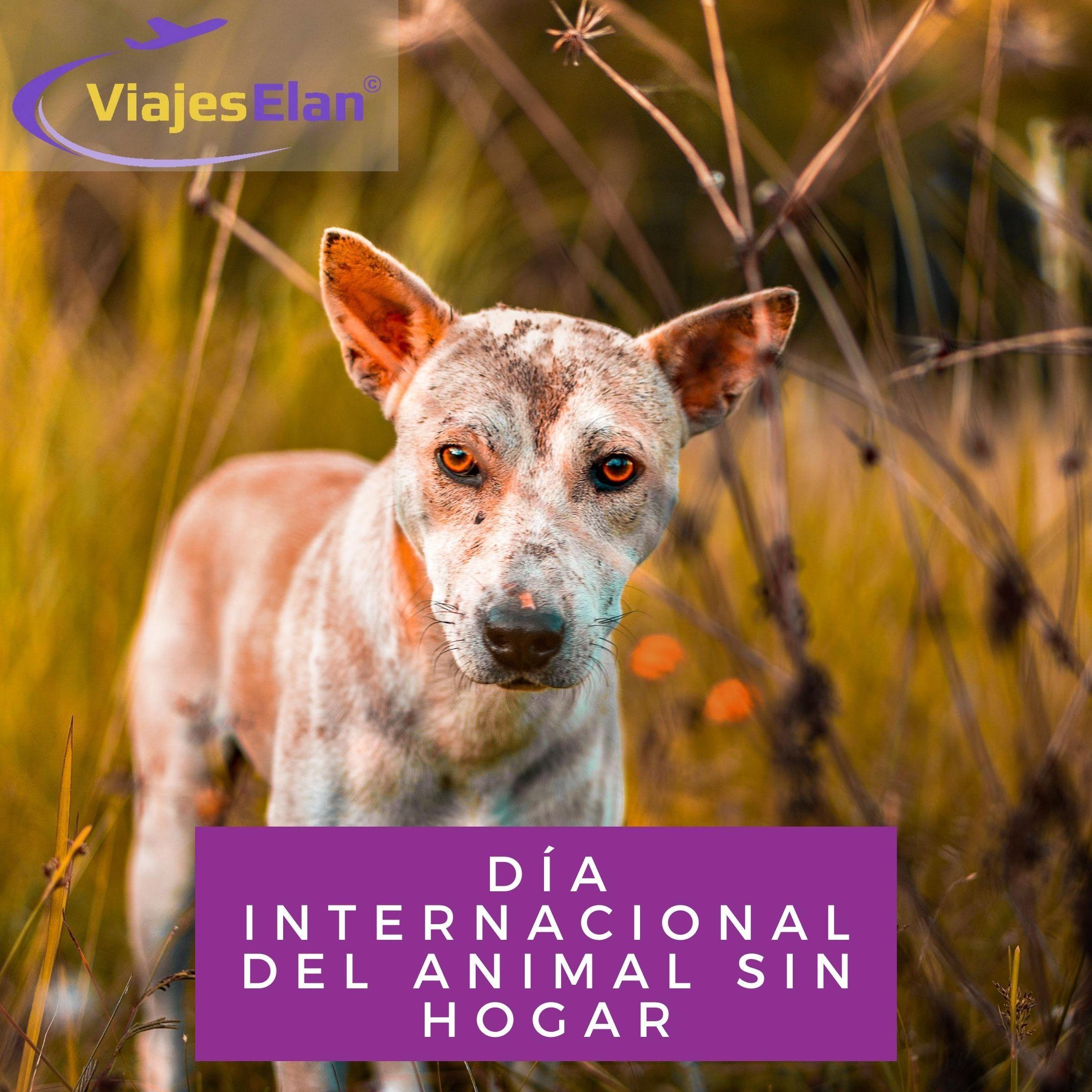 Día internacional animal sin hogar